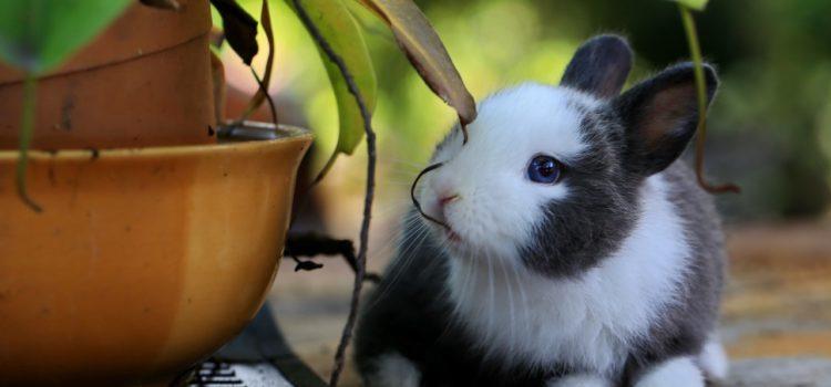 Conejo experimentación animales